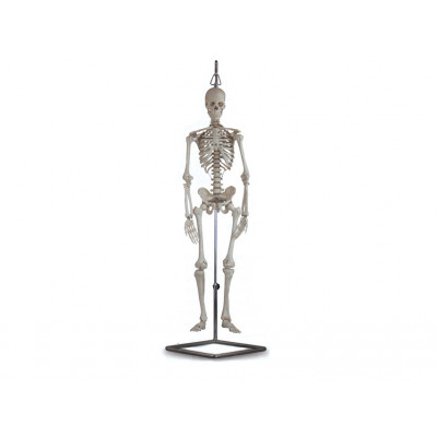 MINI SKELETON 80 CM